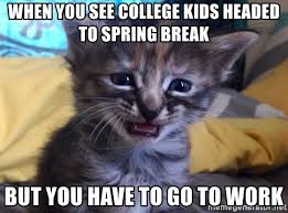 Sad Kitten Meme - when you see college kids headed to spring break but you have to go