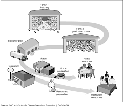 from farm to table file figure 1 farm to table continuum for poultry products