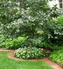 small decorative trees for front yard kitchen living room ideas