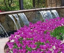 botanica u2013 community gardens in wichita kansas