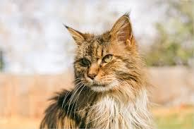 boulder colorado outdoor pet cat photography chloe pet photography