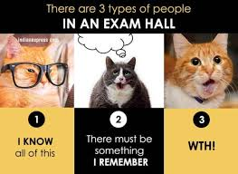 Cat Pics Meme - photos how you live your life in funny cat memes the indian express