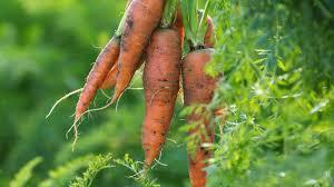 Fall Plants For Vegetable Garden by Vegetable Plants For Colder Mediterranean Climates