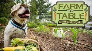 farm to table dinner farm to table dinner on the quad sustainability