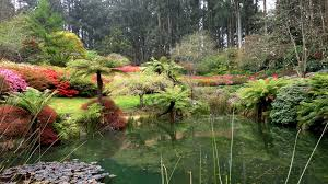7 reasons to visit the national rhododendron garden melbourne
