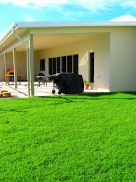 queensland blue couch from coastal turf