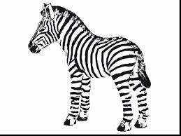 stunning baby zebra coloring pages zebra coloring