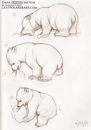 lindsay cibos u0027 art blog daily animal sketch arctic bundle