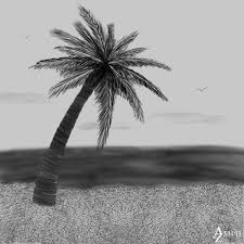 sketches of palm trees palm tree sketch by azophel on deviantart