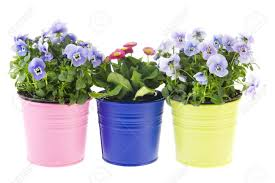colorful garden plants in flower pots on white background stock