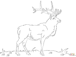 elk coloring page free printable coloring pages