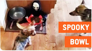 scary halloween candy bowl dog food in halloween candy bowl prank trick or treat youtube