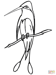 marvellous spatuletail hummingbird coloring page free printable