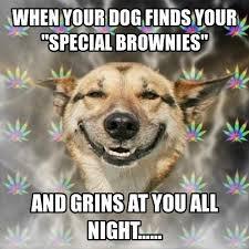 Benson Dog Meme - 284 best pet memes images on pinterest funny stuff pets and