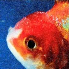 staples photo albums vince staples big fish theory album review pitchfork