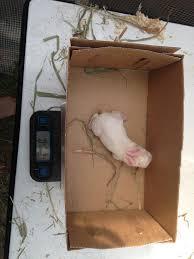 100 backyard rabbitry plans my backyard homestead