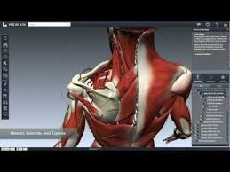 Interactive 3d Anatomy Biodigital Human Anatomy And Health Conditions In Interactive 3d