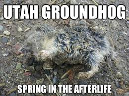 Utah Memes - utahs groundhog memes quickmeme