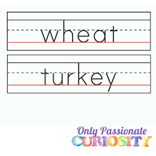 thanksgiving nouns 1 800x800 with logo only curiosity