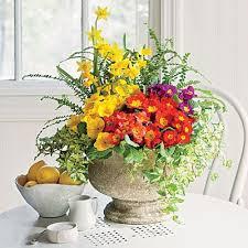 Indoor Plant Arrangements 85 Best Houseplants Images On Pinterest Indoor Plants Indoor