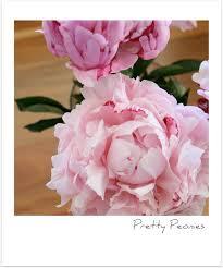 Peonies Season Pink Peonies U2013 The Start Of Summer Sweet Style