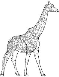 realistic giraffe coloring free printable coloring pages