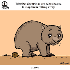 Wombat Memes - wombat gif size 258x193 px find download on gifer