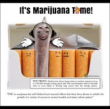 Funny Cancer Memes - marijuana time cannabis fights cancer weed memes