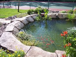 Backyard Swimming Ponds by 76 Best Swimming Ponds Images On Pinterest Natural Swimming