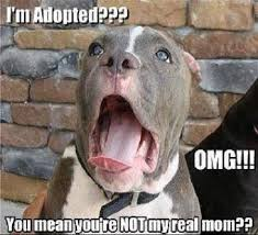 Adoption Meme - adoption meme funny pictures quotes memes funny images funny