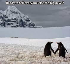 Cute Penguin Meme - 30 funny animal captions part 18 30 pics amazing creatures