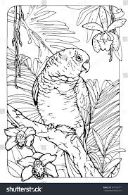 coloring page adults antistress drawing parrot stock vector