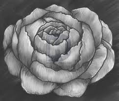 Peony Flower How To Draw A Peony Peony Flower Step By Step By Darkonator
