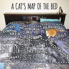 Bed Meme - a cat s map of the bed cute kitty meme funny pet humor lol