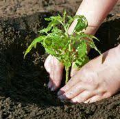 buy vegetable plants online