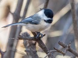 Nj Backyard Birds by Count The Birds At Teaneck Creek Sunday Teaneck Nj Patch