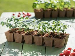 build cheap raised garden beds inexpensive raised beds hgtv