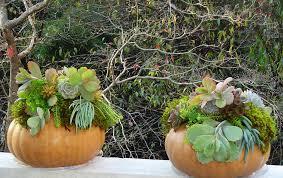 succulent arrangements succulent arrangements on pumpkins forest garden