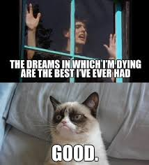 mad world grumpy cat know your meme