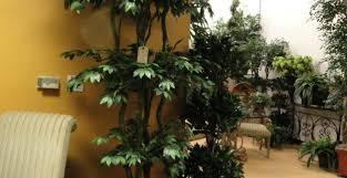 Outdoor Topiary Trees Wholesale - backyardlandscaping biz wp content uploads trees w