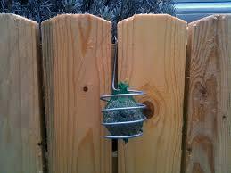 fabrication mangeoire oiseaux fabriquer un support à boule de graisse pour les oiseaux du jardin