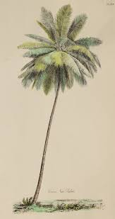 best 25 palm tree illustration ideas on pinterest logotipo de