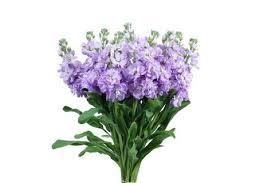 Bulk Flowers Online Stock Flower Buy Wholesale Bulk Flowers Online Free Flower