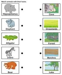 animals and their homes worksheets animals and preschool