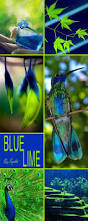 Blue And Gr by Best 25 Cobalt Blue Ideas On Pinterest Cobalt Cobalt Blue