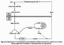 What Happens During The Light Reactions Of Photosynthesis The Process Of Photosynthesis In Plants With Diagram