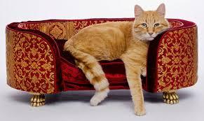 divanetti per gatti ecosystemi pn cani e gatti lavaggio articoli animali per domestici