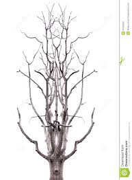 dead tree on white background and see seems deer antler stock
