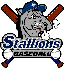 stallions baseball club