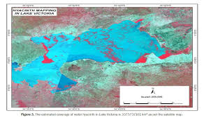 Lake Victoria Africa Map by Production Of Organic Compost From Water Hyacinth Eichhornia